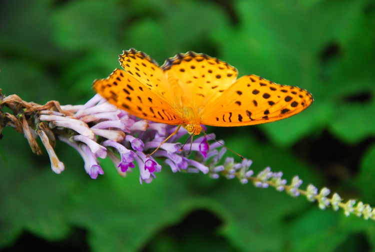 The butterfly and flower closeup in garen Antenna Backgrounds Beautiful Nature Blossoming Flower Bug Butterfly Colesup Colorful Delicate Detalles Flight Flower Garden Green In Macro Natural Outdoor Pattern Single Summer Wild Wildlife Wings Yellow