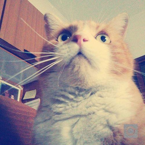 Romeo Ilgatto Maestoso Thecat LeChat Chat Cat Miao Meow Gatto Rosso Gattone Espressione Figo Troppobello Troppofigo Cool Catsofinstagram Naso Ilnasodiromeo Thenoise Thenoseofromeo Lovely Lovelycat Beautiful