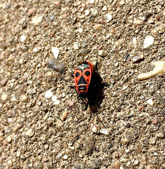 Animals In The Wild Animal Themes Insect One Animal Wildlife No People Day Outdoors High Angle View Animal Wildlife Close-up Nature Ladybug