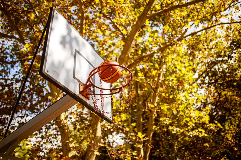 Low angle view of basketball in hoop against trees during autumn