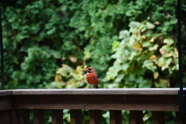 Bird perching on railing against trees
