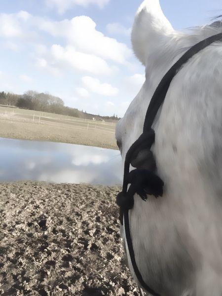 Horse Horses My Horse I Love Horses