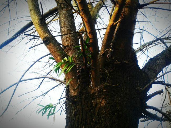 Longchamps Los árboles Del Presente Eso Que Se Mueve PAISAJE URBANO