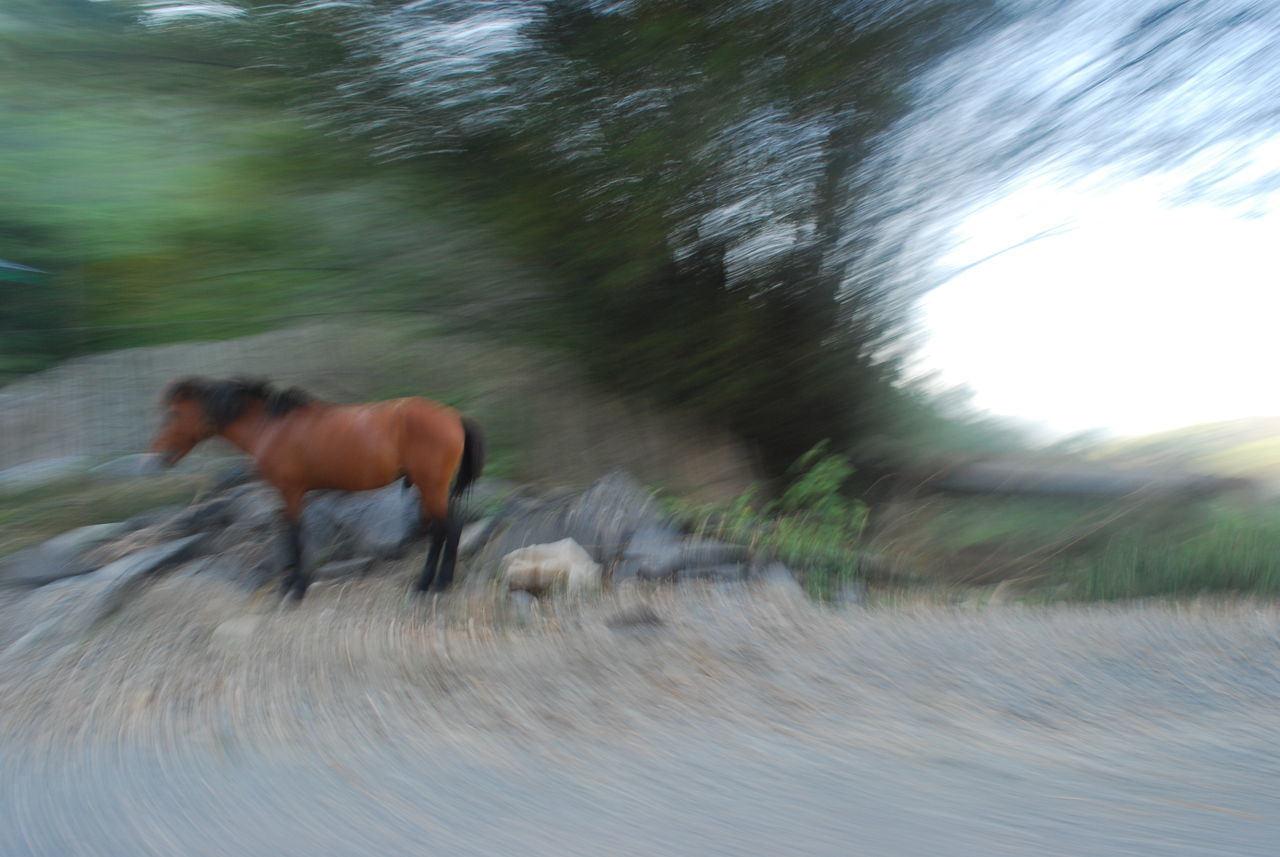 domestic animals, horse, animal themes, mammal, blurred motion, one animal, motion, speed, running, livestock, day, field, full length, outdoors, tree, nature, side view, road, no people, grass, pets