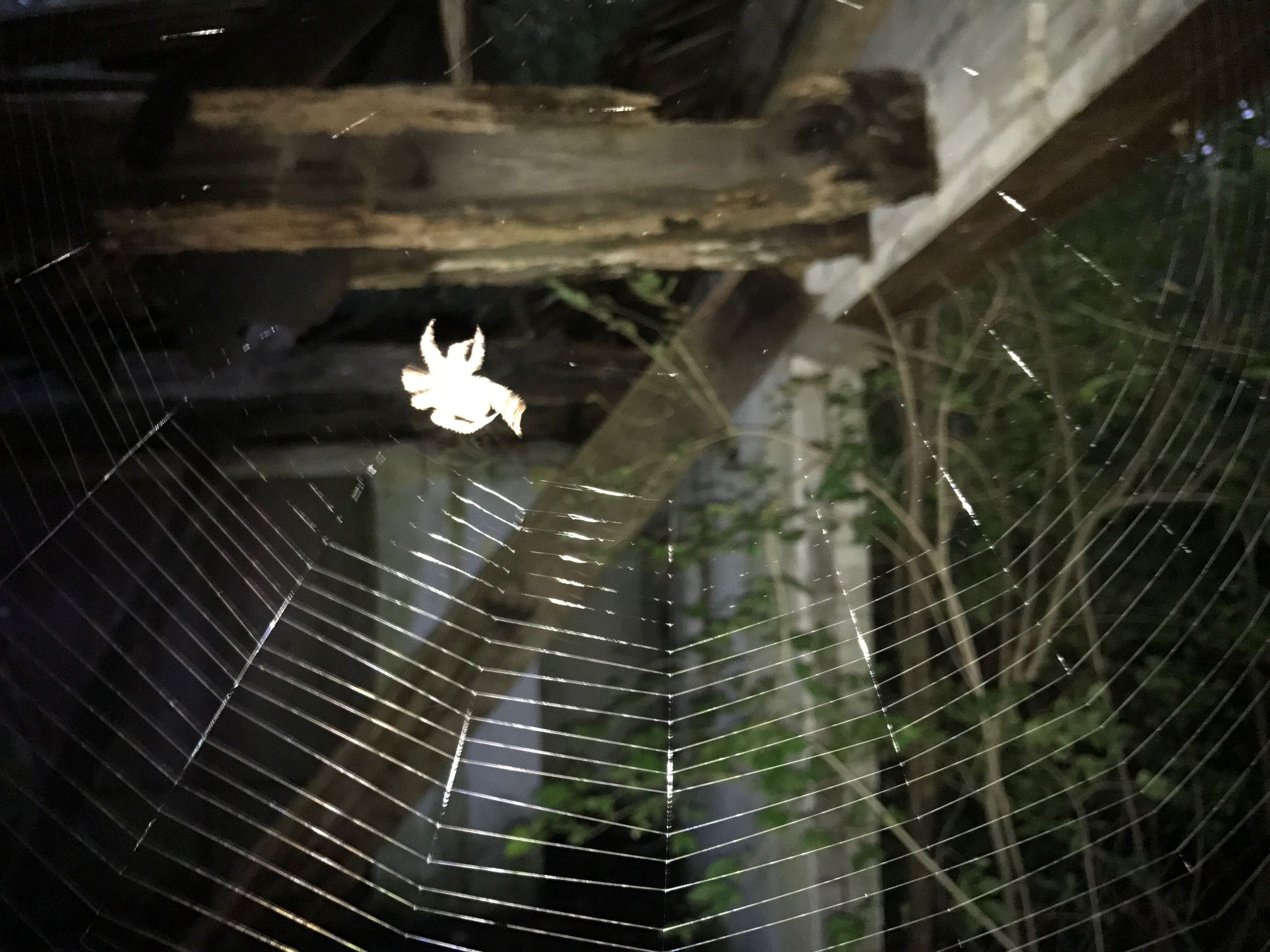 spider, spider web, animal themes, one animal, web, insect, animals in the wild, close-up, day, no people, animal wildlife, focus on foreground, nature, outdoors, fragility