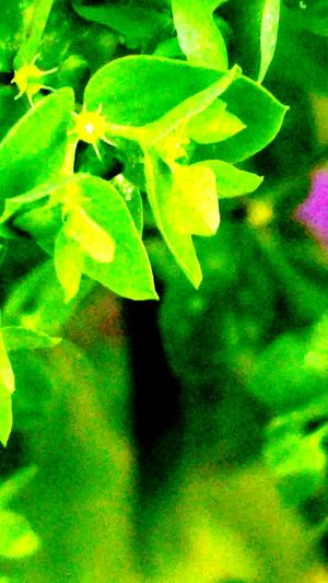 Green Green Green!  Green Color Bright Colors Palnts Outdoors