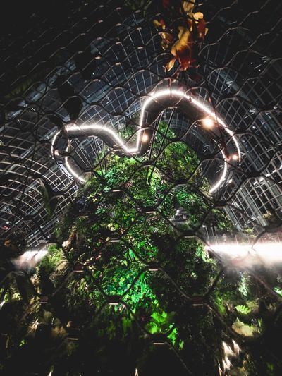 Cloud Forest Gardens By The Bay Night EyeEmNewHere Landscape Landscape_photography Landscape_Collection Nature Singapore Gardens By The Bay No People Nature Green Color Animal Illuminated Spider Web Night Plant
