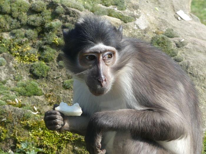 View of monkey sitting on rock