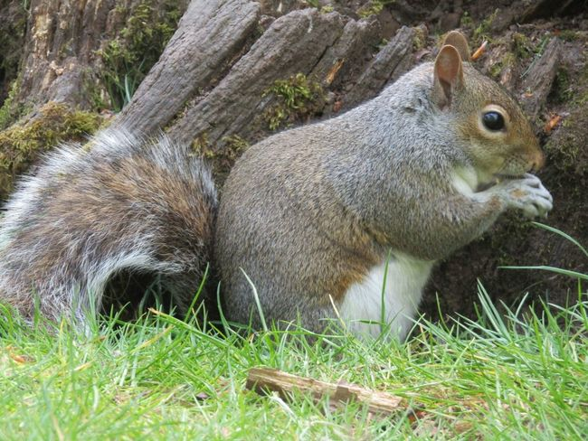 Animal Themes Grass No People Mammal Animals In The Wild Outdoors Day Field Nature One Animal Animal Wildlife Domestic Animals Close-up Sunny Day Amazing Creatures Squirrel Squirrel Closeup Squirrel Photo
