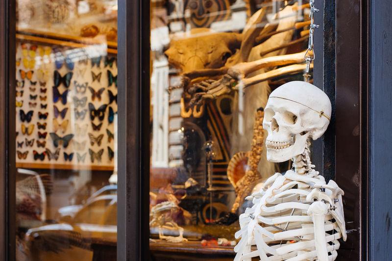 Human skeleton hanging at store window
