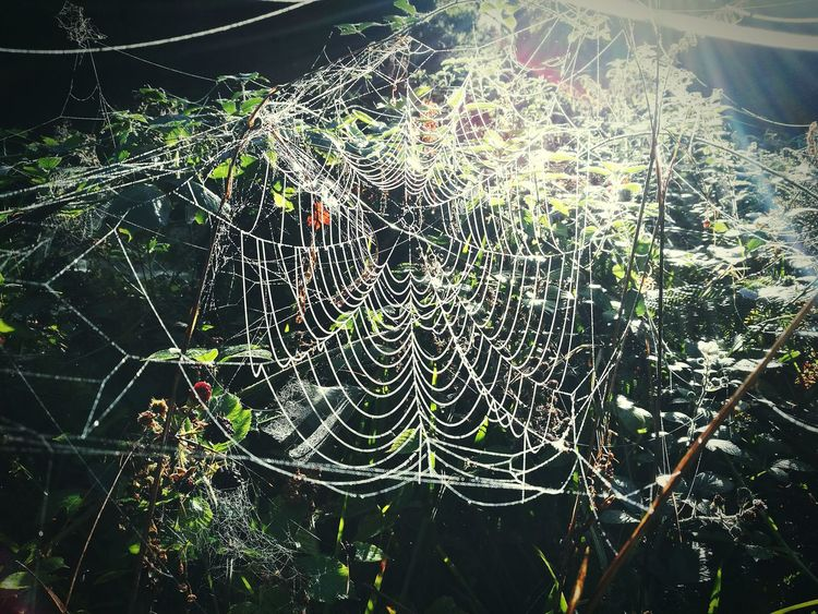 Why be scared of spiders? Close-up Spider Web Natural Pattern Nature Complexity Beauty In Nature Focus On Foreground Phonecamera EyeEm Eye4photography  United Kingdom Northern Ireland Ireland 🍀 Nature Nature Photography Outdoors Sunbeam EyeEm Nature Lover