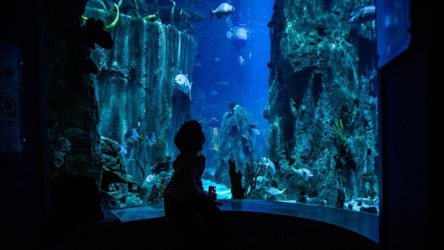 Girl looking at fish in tank at aquarium