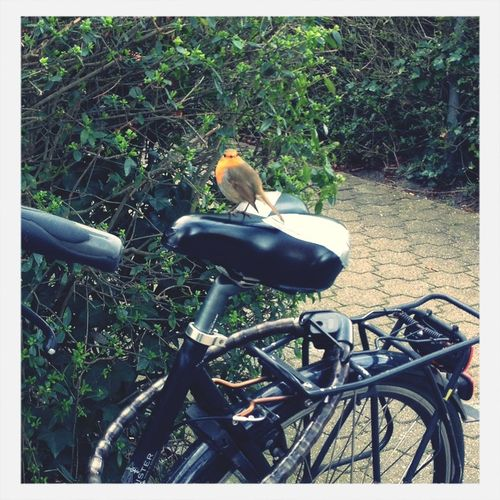 Birds Bicycle