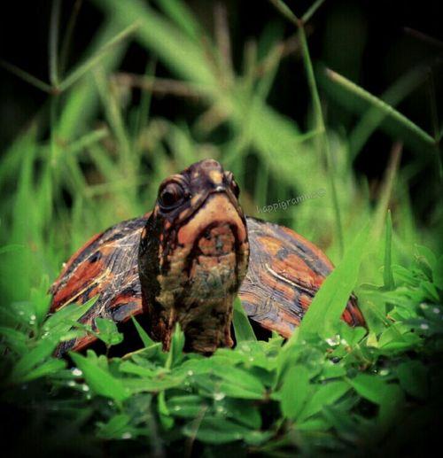 I get around.... Enjoying Life Hanging Out Happigramma Thesmallestlittlethings Turtlehello