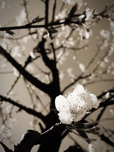 By Lemonni Flowers
