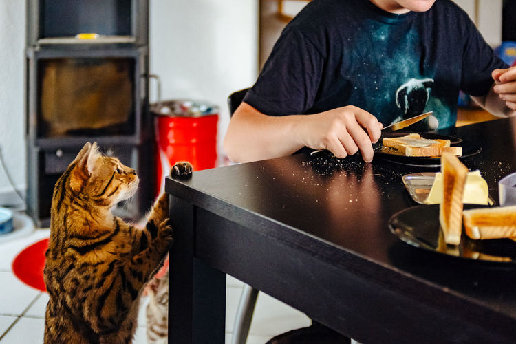 Midsection Of Boy With Cat At Dining Table
