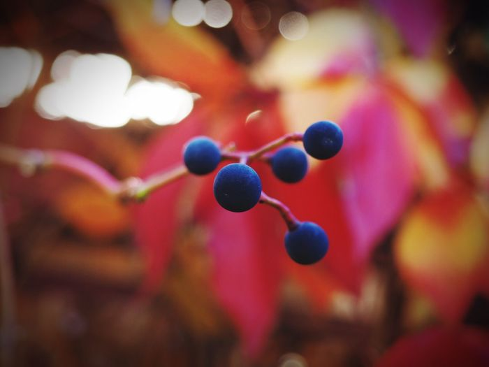Multi Colored Focus On Foreground Close-up No People Outdoors Day Blueberries Black And White Friday