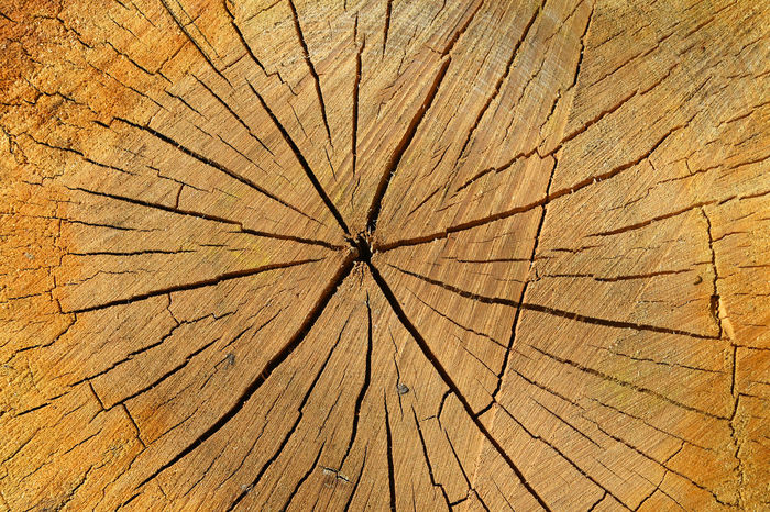 Beautifull old wood cut texture Background Beauty In Nature Brown Close-up Crack Cracked Cut Detail Log Natural Natural Pattern Nature Pattern Star Shape Texture Textured  Timber Wood Wood Cut Wooden Nature's Diversities Color Palette