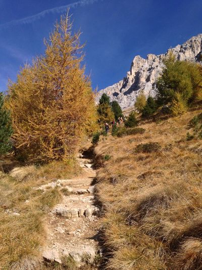 Footpath Path Trekking Autumn Autumn Colors Autumn Leaves Latemar Dolomiti Dolomites South Tyrol Trentino Alto Adige Alto Adige Eggental Val D'Ega Obereggen Italy Mountain Nature Beauty In Nature Tranquil Scene Tranquility Tree Adventure Day Landscape Outdoors Hiking Scenics Sky Growth Real People Grass