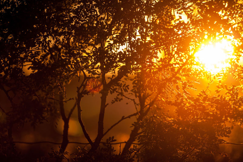 Good night Against The Light Against The Sun Beauty In Nature Branches Foliage Golden Hour Light Nature Norway Oddane Sand Silhouette Sun Sunlight Sunset Trees Paint The Town Yellow