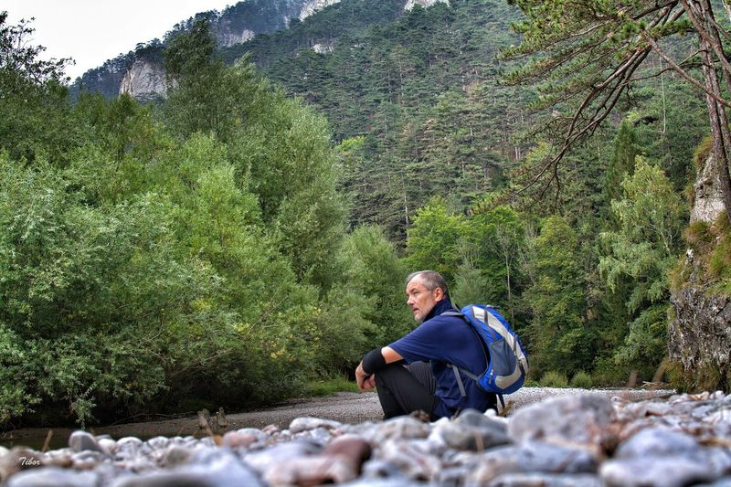 Man Looking Away While Sitting Against Trees At Forest