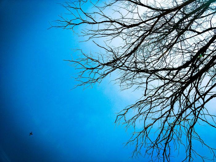Nature Sky Low