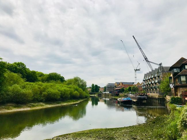Thames London Sky Cloud - Sky Water Tree Plant Nature Reflection Building Exterior Growth Waterfront Outdoors No People Architecture Animal Themes Built Structure Day