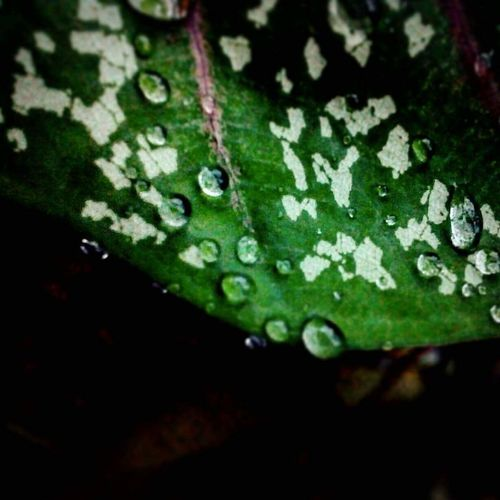 Water Droplets.