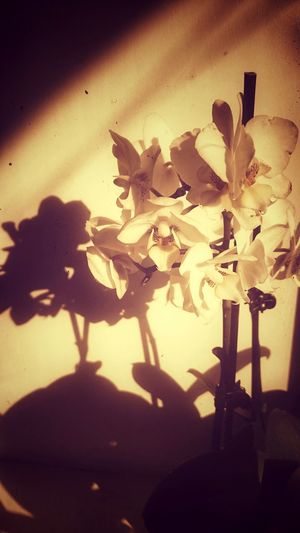 Hello World Taking Photos Old Photo Sun And Shadow Orchid Flower Flower Collection солнце тень Орхидеи цветок