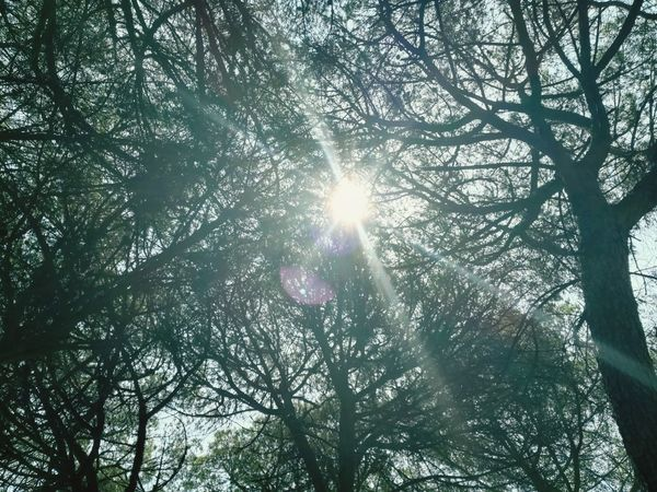 Flarelight Flares Flares In Nature Tesis99 Tree Branch Sunlight Tree Trunk Sun Lens Flare WoodLand Sunbeam Summer Road Tripping The Great Outdoors - 2018 EyeEm Awards