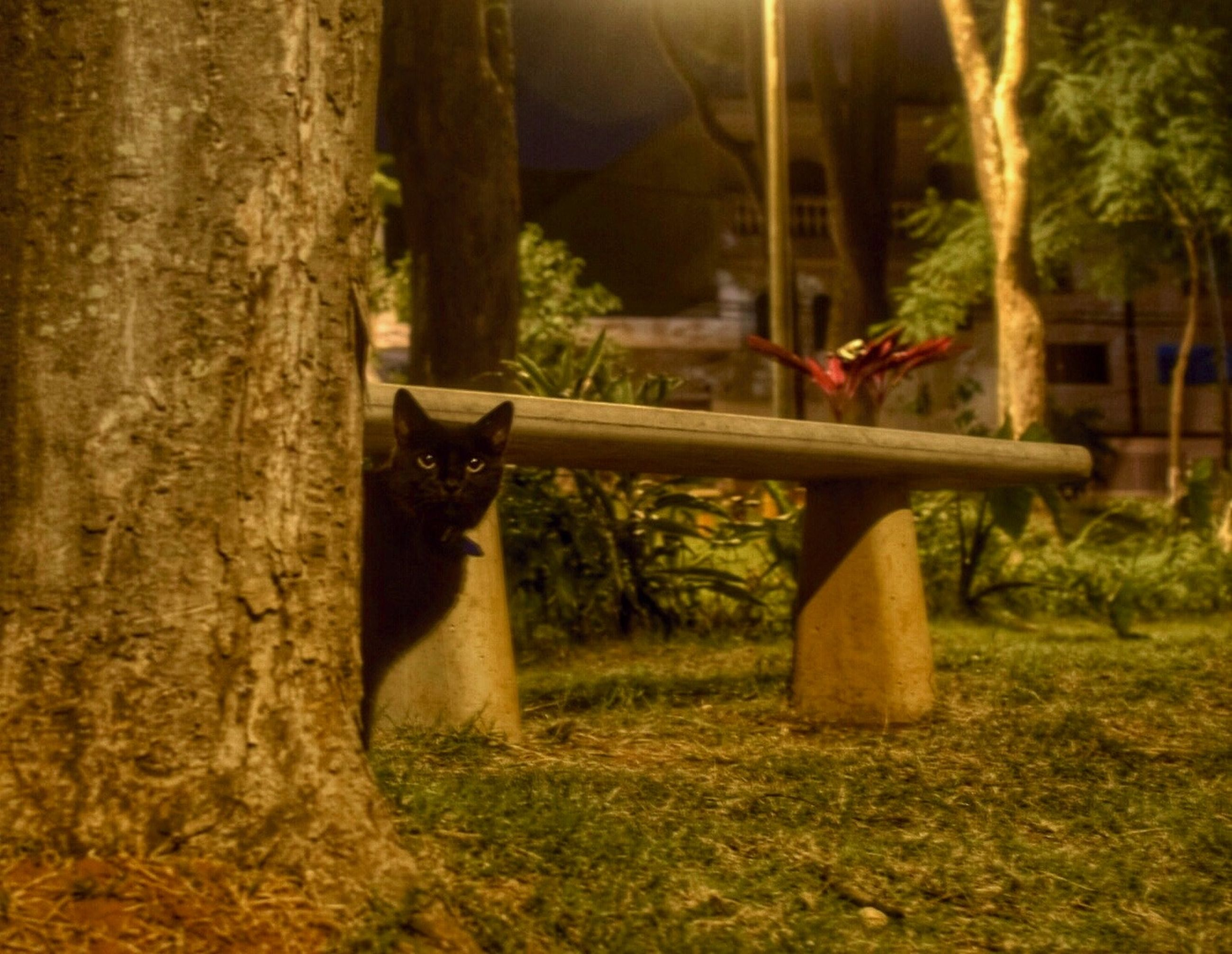 one animal, animal themes, domestic animals, mammal, tree, pets, grass, tree trunk, sitting, domestic cat, nature, dog, field, relaxation, plant, forest, growth, tranquility, cat, day