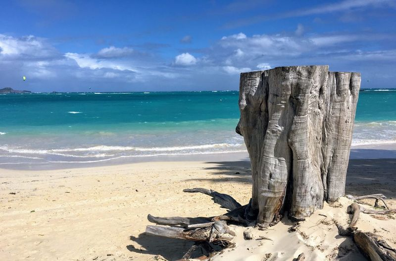 Beach stump Sea Sky Horizon Over Water Beach Nature Beauty In Nature Cloud - Sky Sand Scenics Water Tranquility Sunlight Day No People Outdoors Tree Dead Tree