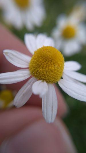 Beautiful Flower!!! Macro Photography Beautiful Nature