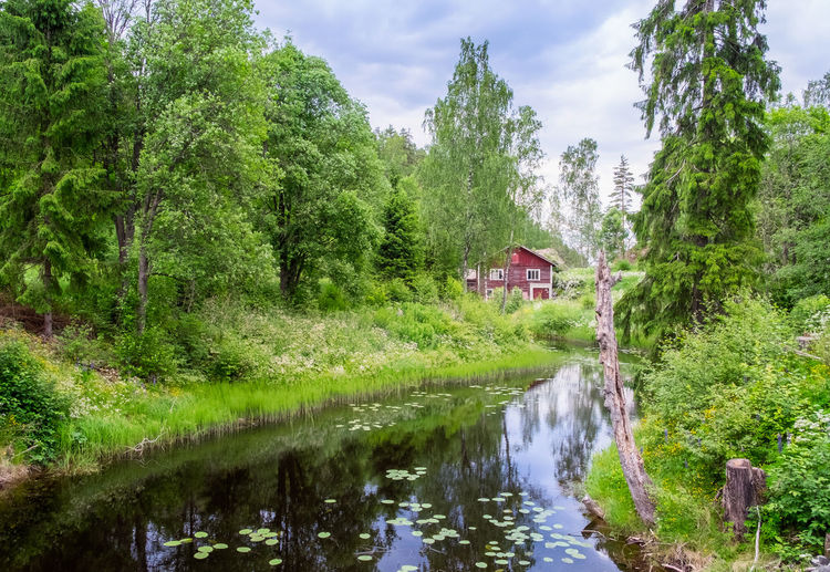 Idyllic river with old abandoned cottage and green lush trees at summer day in Finland Plant Tree Water Built Structure Green Color Nature Growth Architecture Building Exterior Beauty In Nature Reflection Tranquility No People Tranquil Scene Lush Foliage Outdoors Scenics - Nature Building Finland River Beauty In Nature Cottage Abandoned Daylight Landscape