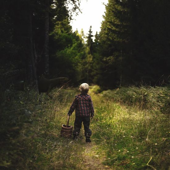 Cut And Paste Rear View Full Length Real People One Person Walking Tree Nature Forest Standing Backpack Day Outdoors Boys Growth Childhood Beauty In Nature People Dinosaur Raptor Montage Photography