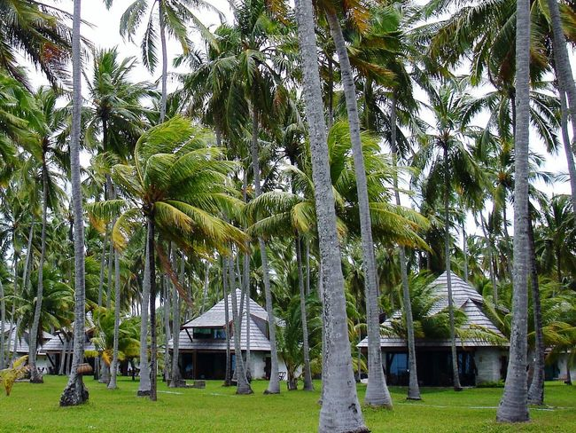 Allgreen Check This Out Romantic Place Nice Atmosphere Coconut Trees Beach Bungalows What Does Freedom Mean To You? Relaxing Nature On Your Doorstep Nature EyeEm Best Shots Popular Pastel Power The Secret Spaces