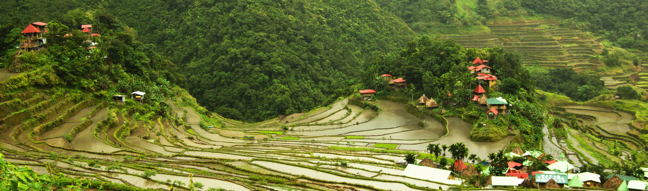 Luzon Tourist Attraction  World Heritage Amphitheater Ancient Civilization Batad Rice Terraces Beauty In Nature Cultures Day Growth Nature Outdoors Plant Rice Fields  Terraced Field Travel Destinations Tree Village