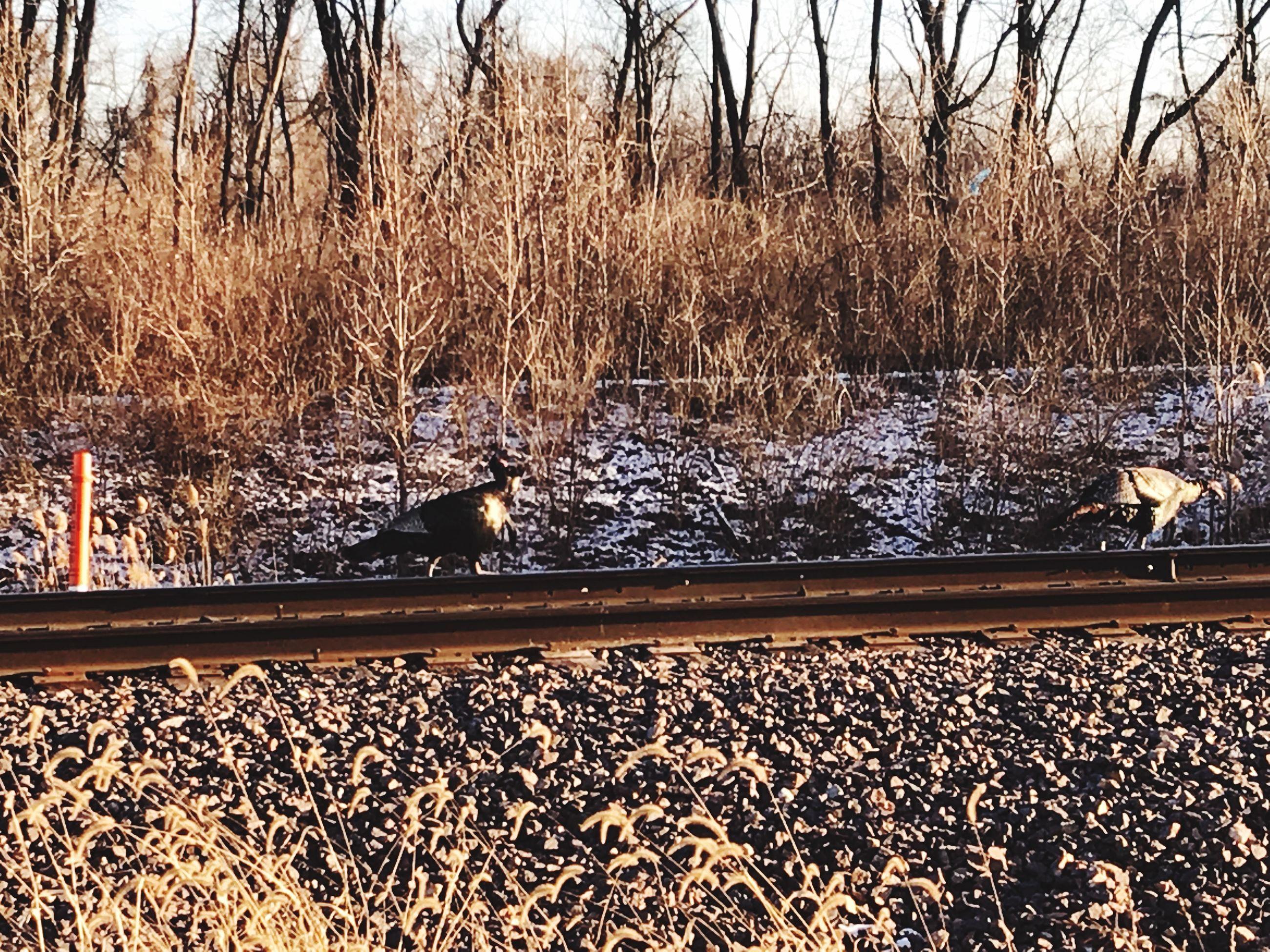 railroad track, transportation, rail transportation, outdoors, nature, no people, tree, day, motion, animal themes, bird