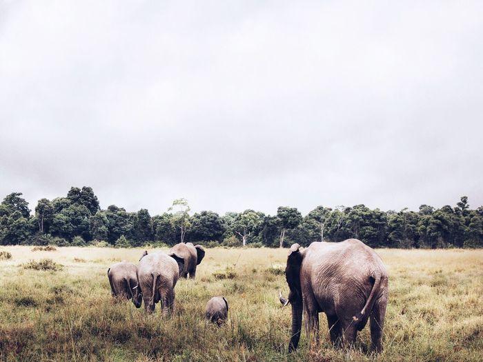 Elephants standing on grassy field
