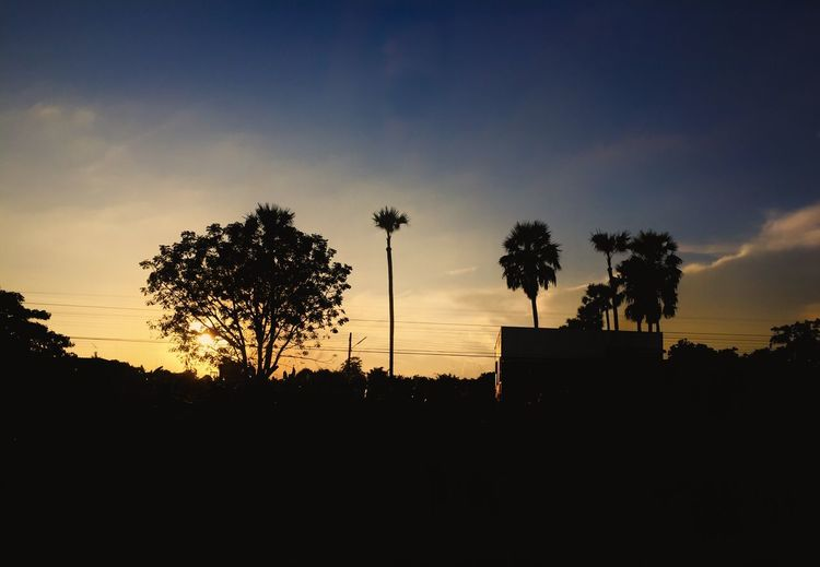 Sun light Evening Copy Space Nature Photography Full Frame Silhouette Sky Tree Plant Sunset Beauty In Nature Scenics - Nature Nature Cloud - Sky Tranquil Scene No People Growth Outdoors Non-urban Scene Palm Tree Copy Space Tropical Climate