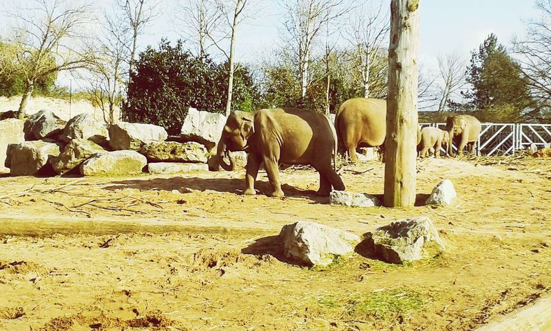 Elephants Chester Zoo Day Out
