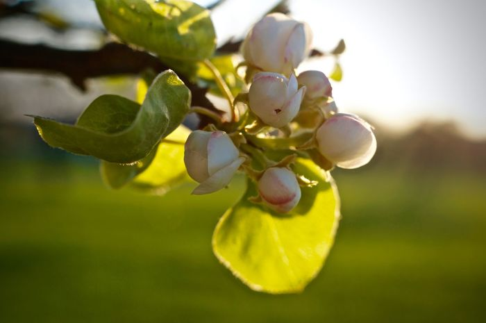 Beauty In Nature Branch Close-up Day Focus On Foreground Food Food And Drink Freshness Fruit Growth Healthy Eating Nature No People Outdoors Tree