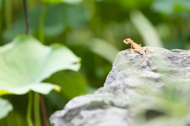 Lizard Animal Themes Animals In The Wild Animal Animal Wildlife One Animal Insect Invertebrate No People Selective Focus Nature Plant Part Beauty In Nature