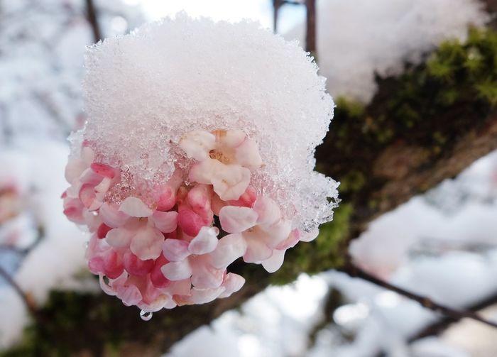 Ice Snow ❄