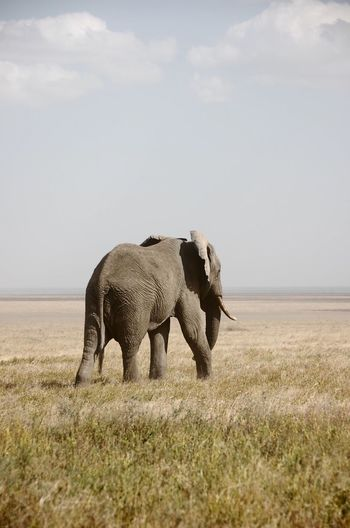 EyeEm Nature Lover Africa Safari Wild Wildlife Nature Nature_collection Elephant Naturelovers Nature Photography Taken in the Serengeti in 2009