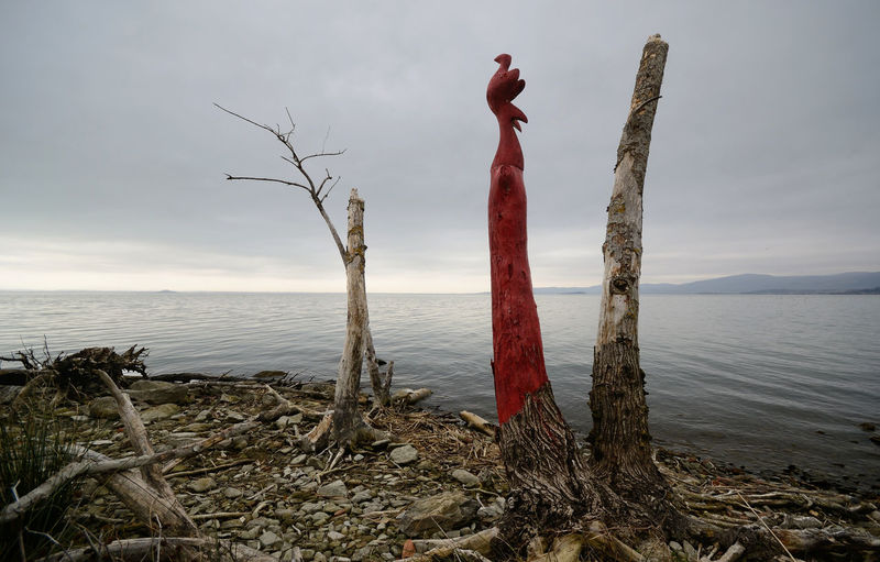 lake view with dead trees among the shoreline on wintertime Tree Trunk Bare Tree Dead Tree Lake View Trasimenolake Branch Pebbles Water Sky Umbria No People Cloud - Sky Dead Plant Tree Outdoors Red Wood - Material Scenics - Nature Driftwood Sadness