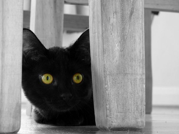 Alert Cat Alertness Animal Themes Black And White Photography Black Cat Black Color Black Kitten Cat Cat Eyes Close-up Cute Kitten Day Domestic Animals Domestic Cat Feline Hiding Indoors  Kitten Mammal No People One Animal Pets Playful Cat Portrait Yellow Eyes