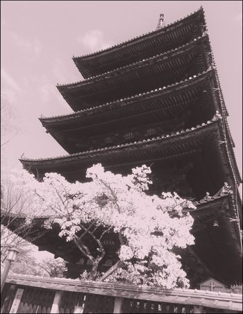 Pinkish mood Black&pink Travel Travel Destinations Japan EyeEmNewHere Shanti Serenity Serendipity Cherry Tree Cherry Blossoms Japan Architecture Building Exterior Low Angle View Built Structure Place Of Worship An Eye For Travel Spirituality Outdoors No People Day Roof Nature Sky Tree Beauty In Nature