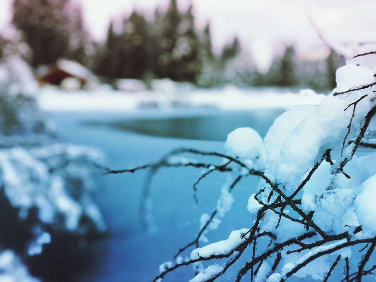 Frigid Fingers. Pond Winter Cold Temperature Snow Nature Frozen Weather Ice