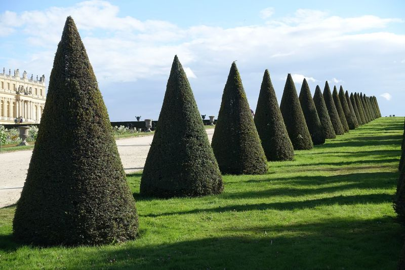 Close-Up Of Cone Shaped Hedges On Field Against Sky